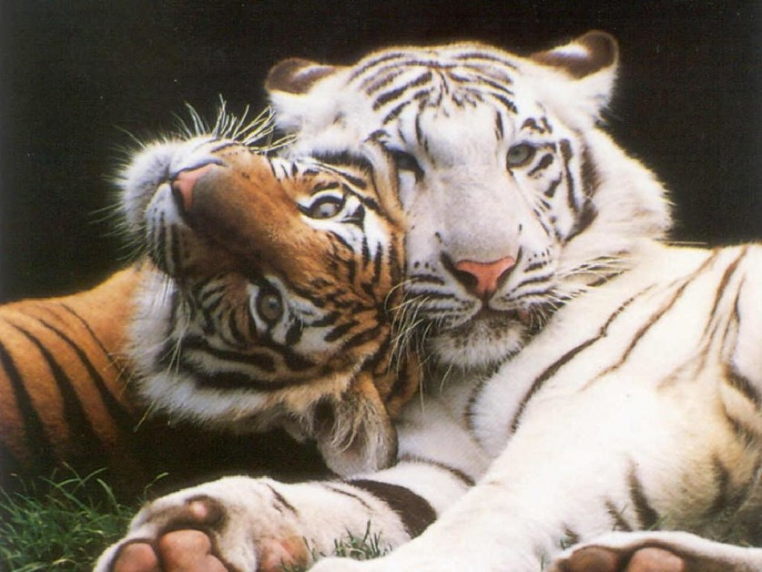 formation soigneur animalier avantages